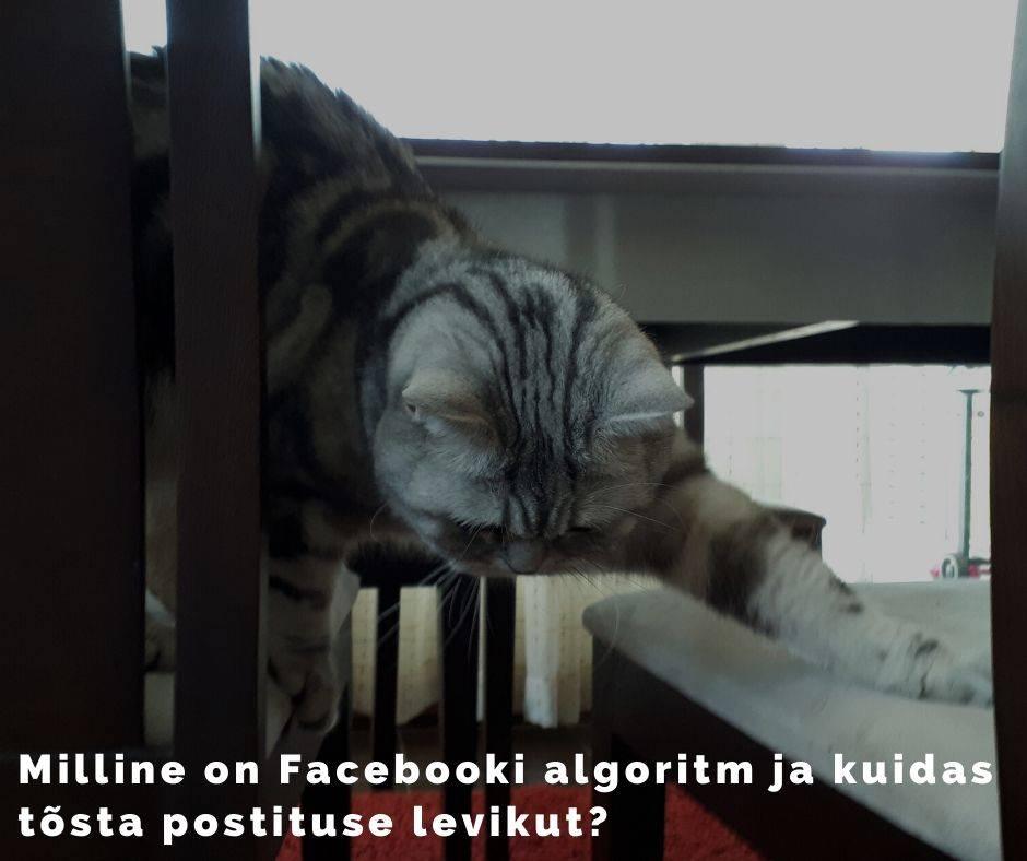 Facebooki algoritm