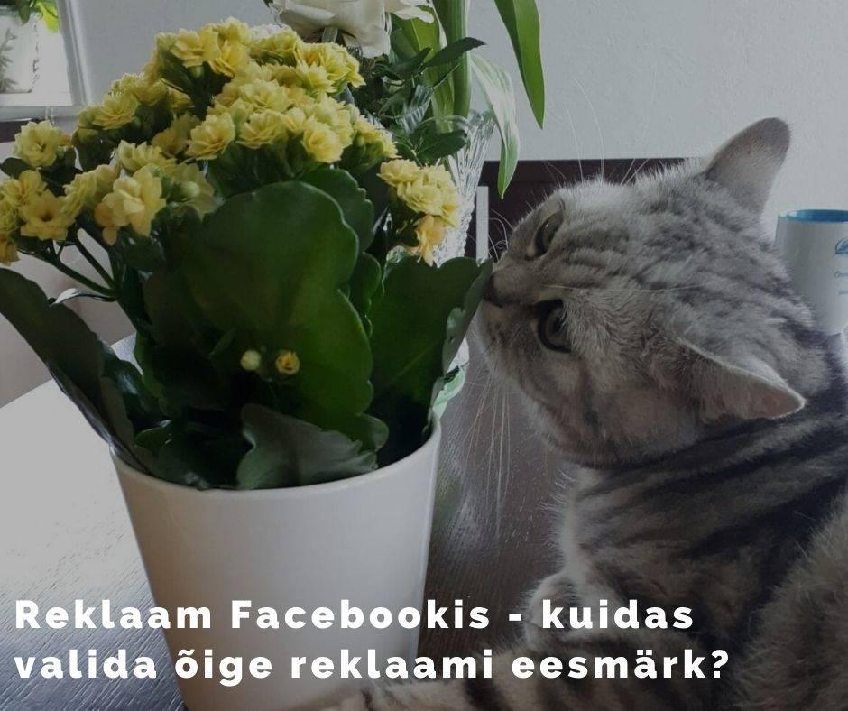 Reklaam Facebookis, Facebook Ad Objectives